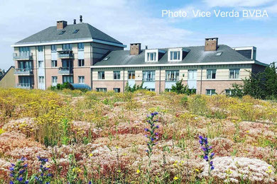 intensive substrate for green roofs
