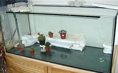 Bild zeigt den Grundaufbau für den hinteren Bereich. Experimentieren sie auch mit den Planzen, somit bekommt man eine bessere Vorstellung, wo am Ende die Pflanzen ihren Platz finden werden.