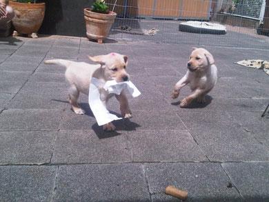Catweazle & Mila