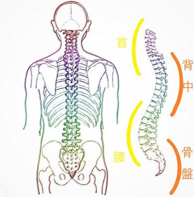 ドクターバンカイロプラクティック:骨格矯正 骨盤矯正