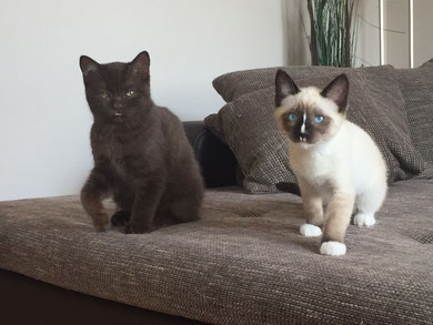 Columbo & Kumpel