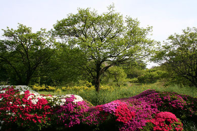 Near Kozo-ji (a Buddhist temple) in Machida, on May 3, 2010