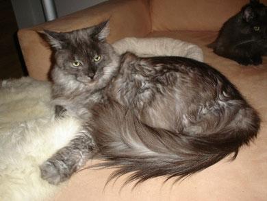 Katze auf kleinem Lammfell...