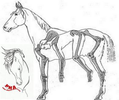 essayons de nous mettre dans la peau d'un cheval !