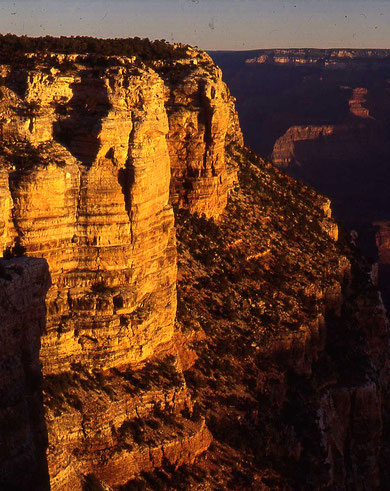 Amerika (irgendwo im Grand Canyon)