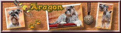 Aragon & Frauchen Gisela entführen Euch in die Welt eines vor Lebensfreude & Glückes sprühenden kleinen Schnauzers!Lasst euch doch mal verzaubern!