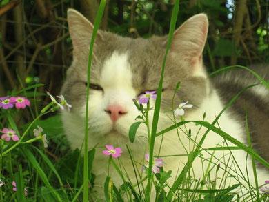 Mit Tieren sprechen - Foto Katze Alexej