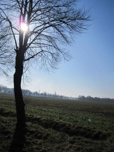 Dunst liegt über den Feldern... der Begleiter des Wandels...