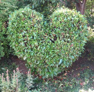 Dieses Herz hat mir Barbara für Sandy geschickt. Dank dir vielmals!!