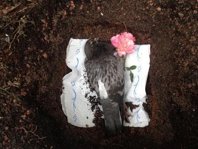 Das ist unsere Taube die wir leider beerdigen mussten..
