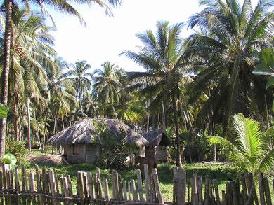 im Südosten Cuba`s .... bei den Kokosbauern