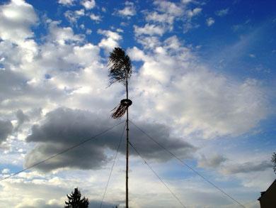 Der Dorfmaibaum