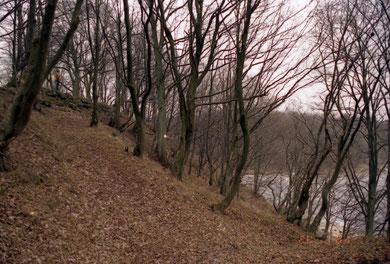 северная сторона замка фото 2001 г.