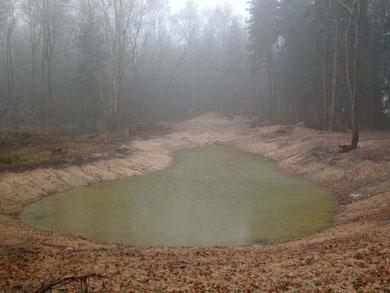 """Das Waldgewässer im NABU-Wald """"Hölle""""."""
