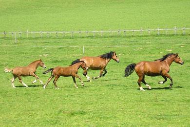 Vergnügen mit Pferden, reiten