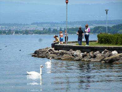 bootvaart, zwemmen, fietsen rond het meer