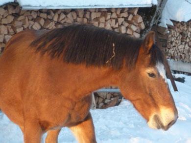 Pferdesport, reiten, Marché concours