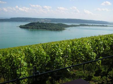 Rebberge, herrlicher Chasselas, Weinproben