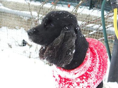Bella la neve :)