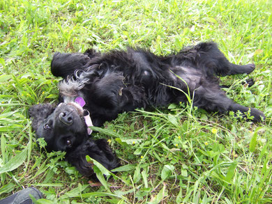 che bello strofinarsi nell'erba :)