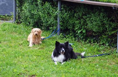 Raven und sein Kumpel Toby warten darauf, dass wir endlich mit der Theorie fertig werden ;-).