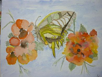""""""" zwischen zwei Blüten"""" März 2012"""