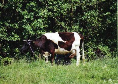 Bauer beim Melken