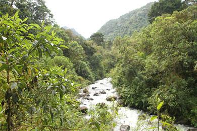 Trekking La Pastora Fluss Otún Los Nevados