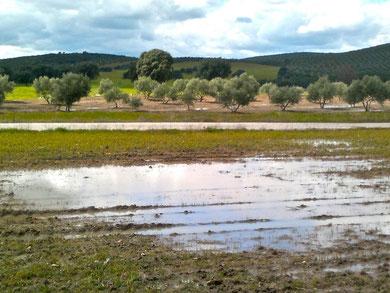 Primavera encharcada en la Mancha