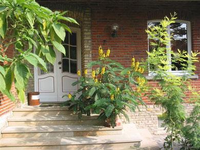Dieses Foto mit dem Eingang zum Haus in Telgte wurde von Doris Fechner zugesandt. Siehe auch Kommentar im Gästebuch