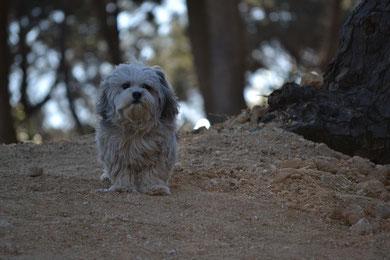 Teddy aus Korea