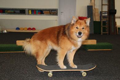 Mikko auf dem Skateboard