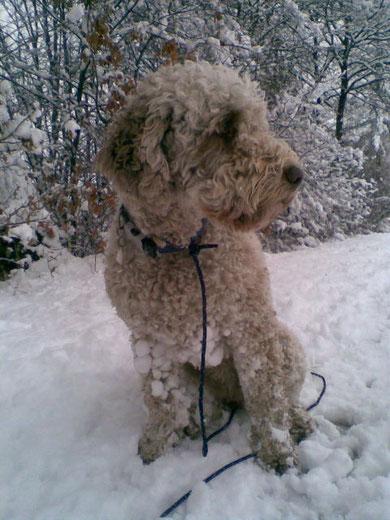 Dosca im Schnee