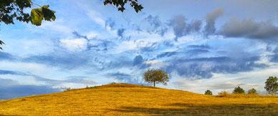 Le merisier sur la colline du Parasoir