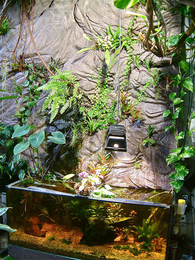 Seitenwand mit Aquarium, Wasserlauf und Bepflanzung. Diese sehr gelungene Wand gestaltete der Terrariendesigner Michael Schneider.