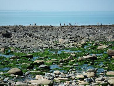 Port du Lude, Carolles, Manche, Basse-Normandie