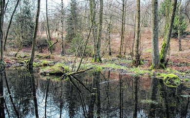 Foto: AZ / Förderverein Propsteier Wald