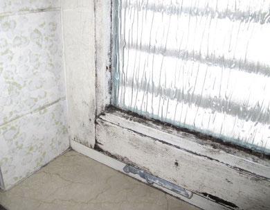 Tauwasser an einem Fenster führt zu Schimmelpilzen. Eine regelmäßige Lüftung ist dringend erforderlich.