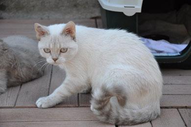 Ion (7 mois), adopté avec Iéna - FA Stéphanie
