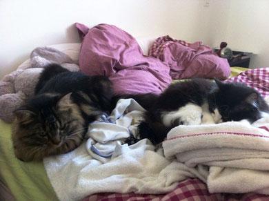 Hapy (à gauche) et Gaia (à droite) lovés sur le lit !