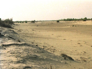 Old Yarkand river runs dry close to Bachu in northwestern edge of Taklimakan Desert. Photo by T. Ishiyama.
