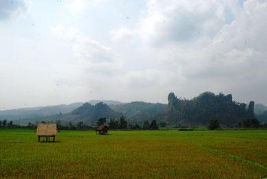 Après la descente des montagnes laotiennes, ce sont de verdoyantes rizières qui dominent la plaine