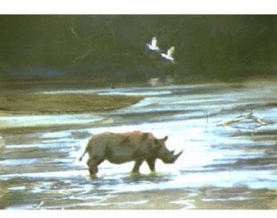 Black rhino sul fiume