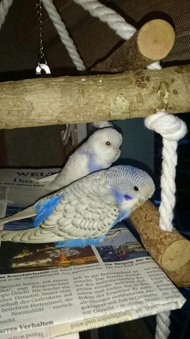 Amy und Piet