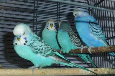 Spike, Tommi, Hugo und Benni gehen jeden Abend schön brav in den Käfig und schlafen dort.