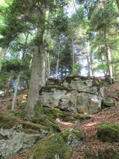 Stein- und Waldkräfte ............. .