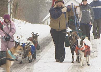 Mit einem Hund, einem Esel und Ziegen führt die Wanderung durch den Naturpark des Hohen Venns