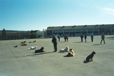 Training des Hundeclubs