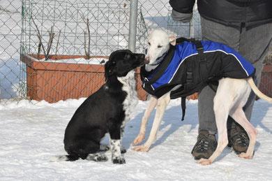 Die zwei neuen Schweizerinnen beim Kennenlernen