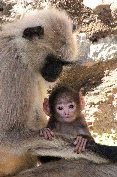 Affenmutter und ihr Baby in Indien
